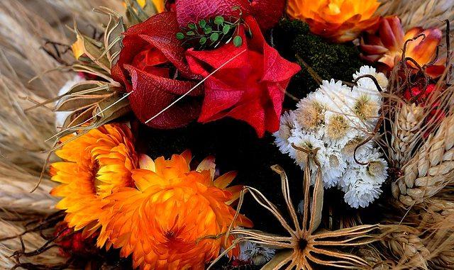 sušená -květina