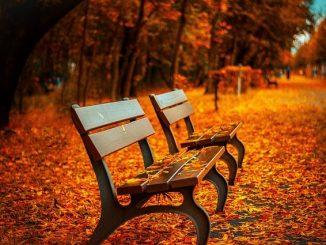 dřevěné lavičky